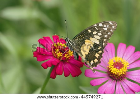 Butterfly on flower in tropical garden or in nature.