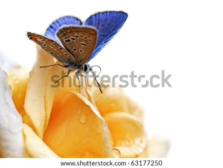 butterfly on flower isolated on white background - stock photo