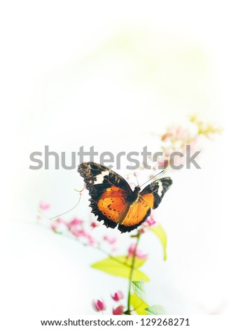 Butterfly on flower with copy space on top. - stock photo
