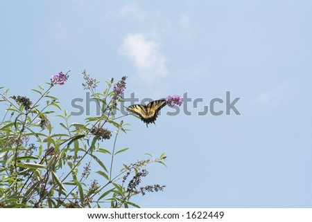 Butterfly on flowering bush against the sky - stock photo