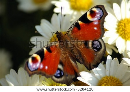 butterfly on flowers - stock photo