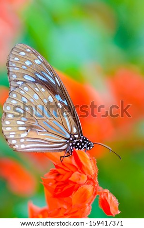Butterfly on flowers in fresh nature - stock photo