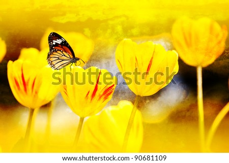 butterfly on flowers (Tulip) for texture use - stock photo