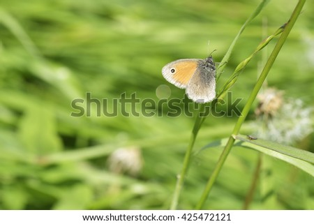 butterfly on green grass - stock photo