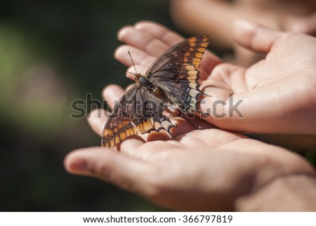 butterfly on hand - stock photo