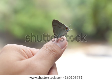 butterfly on hand in park
