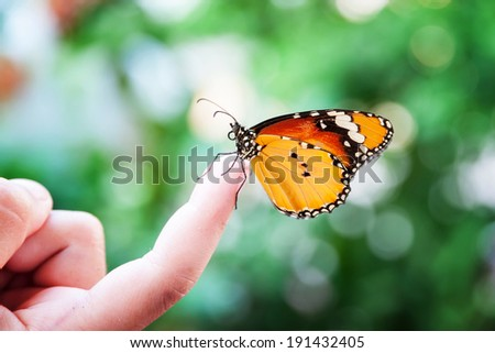Butterfly on kid's finger - stock photo
