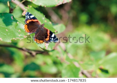 Butterfly on leaves - stock photo