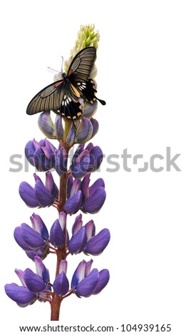 Butterfly on lupine flower - stock photo