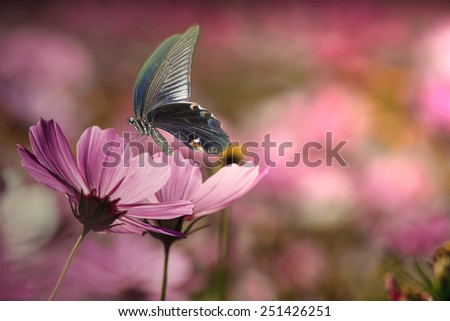 Butterfly on nice flower for adv or other purpose use - stock photo