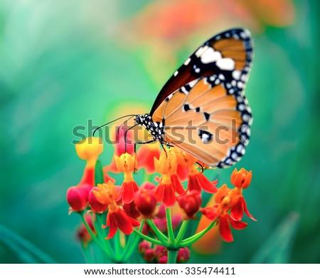 Butterfly on orange flower in the garden - stock photo