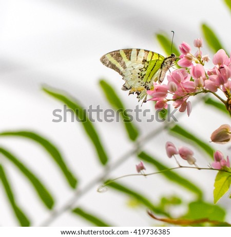 Butterfly on pink color flowers in a garden