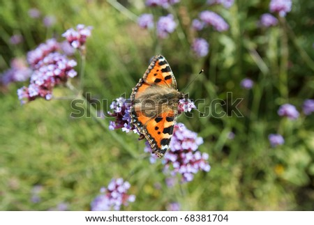 Butterfly on plant - stock photo