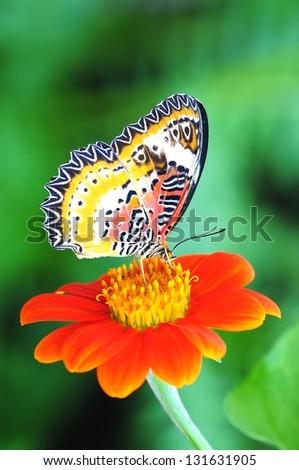 Butterfly on Sunflower - stock photo