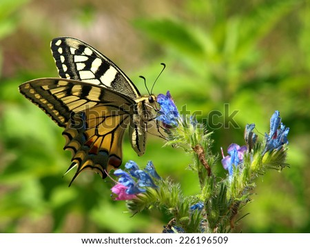 butterfly on the blue flower          - stock photo