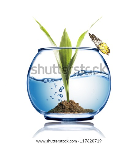 Butterfly on the fish bowl with plant growing inside - stock photo