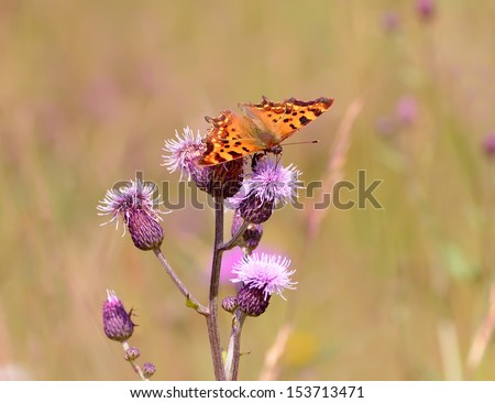 Butterfly on the meadow flowers