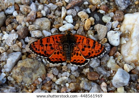 Butterfly on the pebbles.