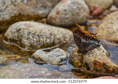 Butterfly on the river rock, Corscia, selective focus