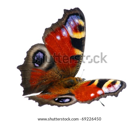 butterfly on the white - stock photo