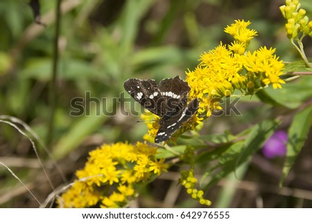 butterfly on the yellow flower