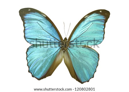 butterfly on white - stock photo