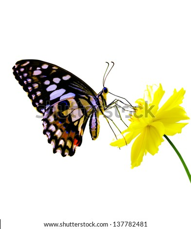 Butterfly on white. - stock photo