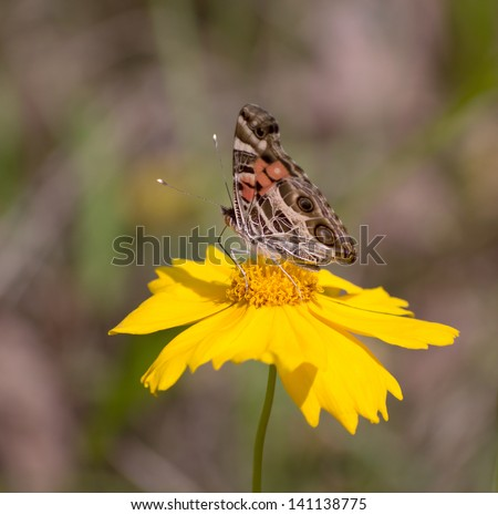 Butterfly on yellow flower. - stock photo