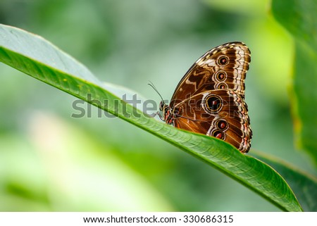 Butterfly outdoor on flower - stock photo