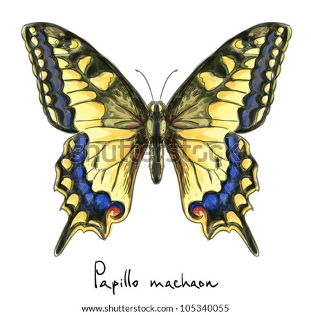 Butterfly Papillo Machaon. Watercolor imitation.  Raster version. - stock photo