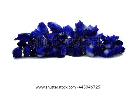 Butterfly pea or Blue pea flowers  - stock photo