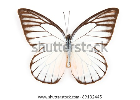Butterfly Prioneris philonome isolated on white background