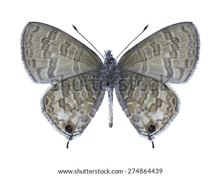 Butterfly Prosotas nora (male) (underside) on a white background - stock photo