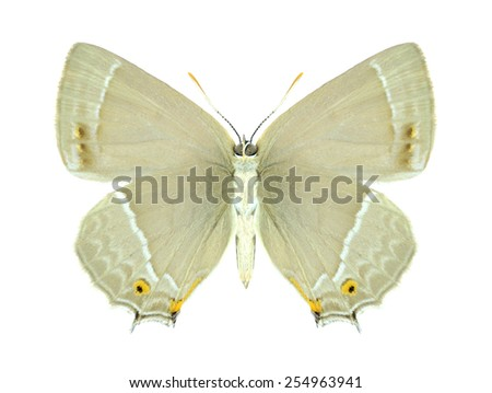Butterfly Quercusia quercus (female) (underside) on a white background - stock photo