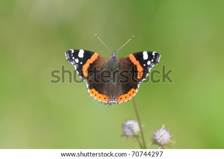 Butterfly Red Admiral/Sunny summer day near Moscow, Russia - stock photo
