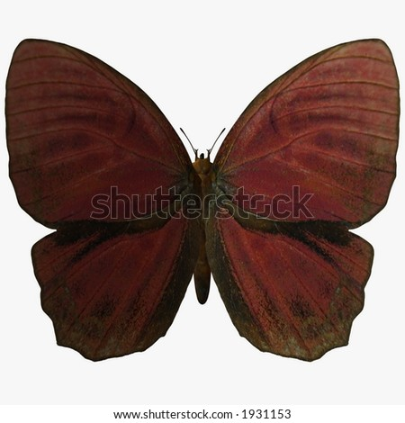 Butterfly-Red Rooster - stock photo