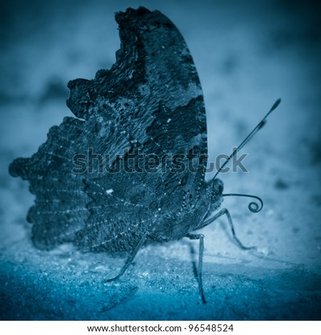 butterfly rest on ground close up - stock photo