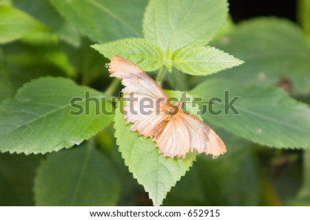 Butterfly resting on the leaves