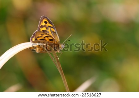 butterfly resting on the stem of a plant
