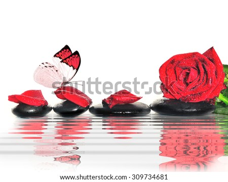 Butterfly, rose, petals and black  stones in the water. Spa concept.