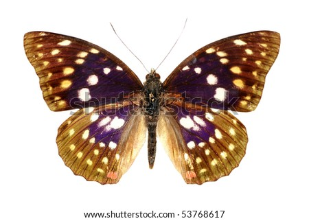 butterfly set isolated in white background. - stock photo