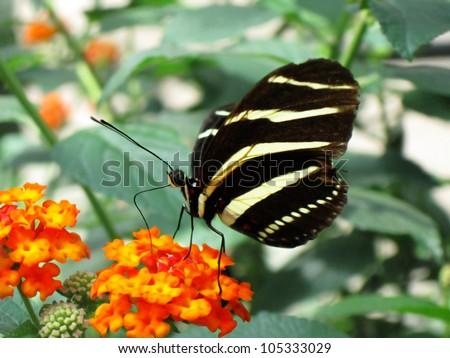 Butterfly sits on flower in zoo in Stuttgart, Germany - stock photo