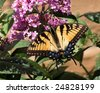 butterfly sitting on a flower - stock photo