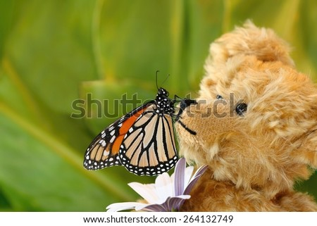 Butterfly sitting on a teddy bear's nose with a green, leafy background - stock photo