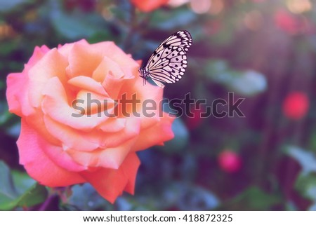 Butterfly sitting on rose in nature - stock photo