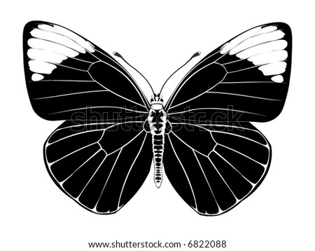 Butterfly Sketch - stock photo