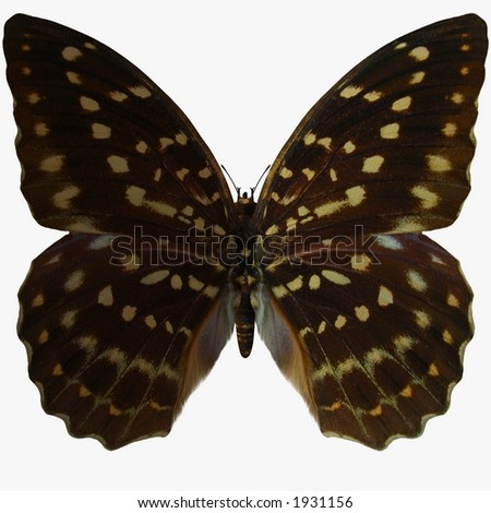 Butterfly-Speckled Hen - stock photo
