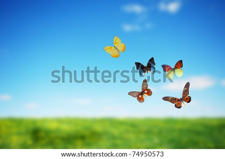 Butterfly spring field. A group o colorful butterflies in the spirng summer grass land - stock photo
