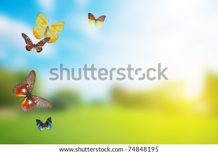 Butterfly spring field. A group o colorful butterflies in the spring summer grass land - stock photo