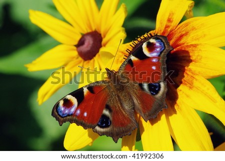 Butterfly, taking off from yellow flower in the garden - stock photo